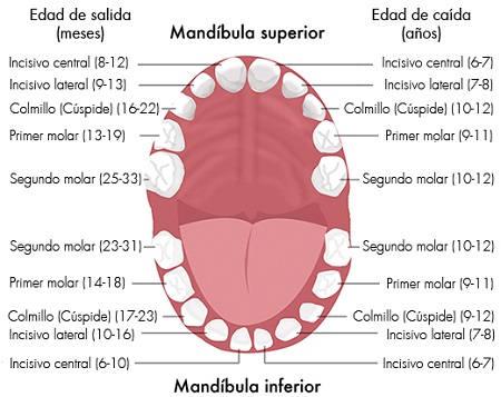 recambio dental
